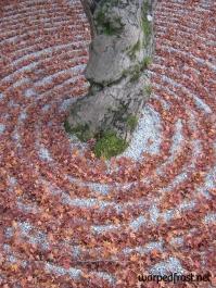 Fallen leaves fill the grooves of the sand garden in Kōmyōzenji (November 2010)