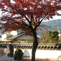 Kōmyōzenji fills up every fall with crowds admiring the blazing foliage (November 2010)