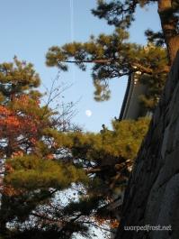 松月城 (matsugekki = pine moon castle) is a word I made up in the style of other such compounds, like 雪月花 (setsugekka = snow moon flowers, a combination which calls to mind the beautiful things of all seasons); the castle here is Nagoya Castle (November 2012)