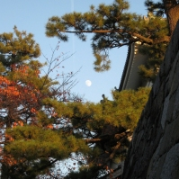 松月城 (matsugekki = pine moon castle) is a word I made up in the style of other such compounds, like 雪月花 (setsugekka = snow moon flowers, a combination which calls to mind the beautiful things of all seasons); the castle here is Nagoya Castle (November 2012)
