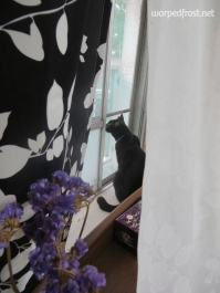 The neighbor's cat would sometimes get out and come into my apartment through the verandah (May 2013)