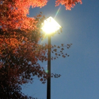 A streetlight takes the sun's place on these fall leaves in Nagoya (November 2012)