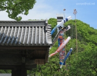 Koinobori (carp streamers) fly over the grounds of Dazaifu Tenmangū in anticipation of Children's Day. (April 2016)