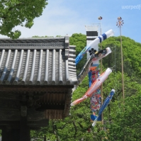 Koinobori (carp streamers) fly over the grounds of Dazaifu Tenmangū in anticipation of Children's Day. (April 2016)
