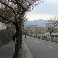 Looking down the hill of the first high school I worked at in Fukuoka (April 2010)