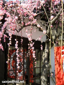 A spray of plum flowers caressing an umegaemochi shop on the grounds of Dazaifu Tenmangū (February 2010)