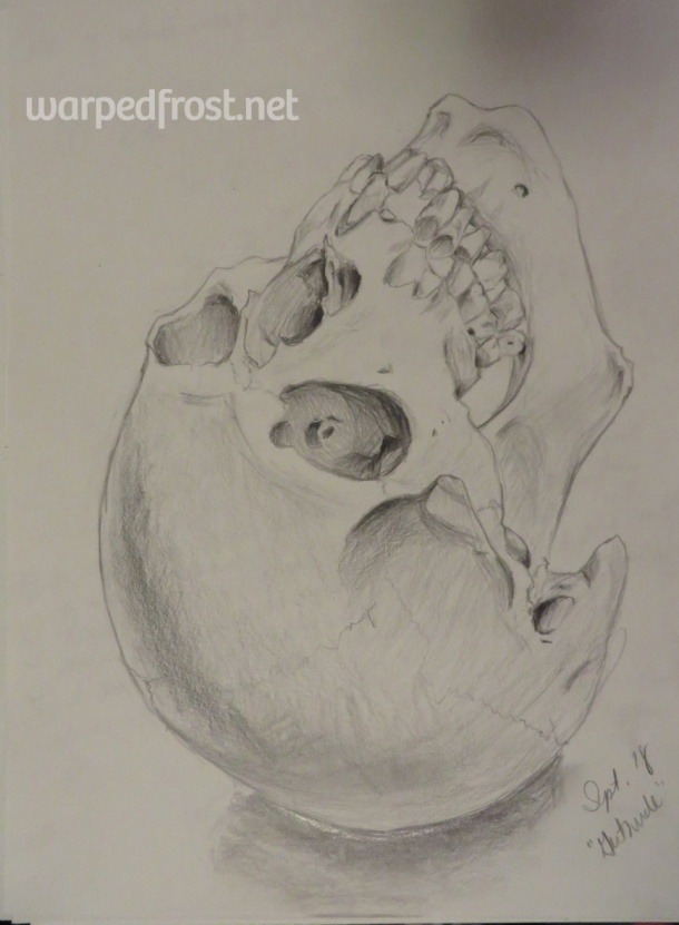 Drawn from an actual human skull the prof named Gertrude. It was a privilege to draw her.