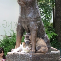 The faithful dog Hachi-ko guarding some cats at his spot in Shibuya. (May 2016)