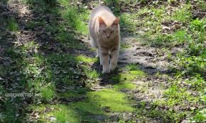 SamSi, Golden Tiger (c.1999–2017)