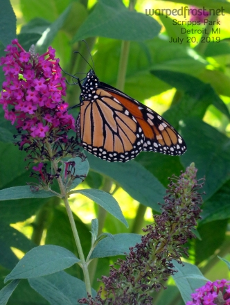 Scripps Park Monarch Side Full